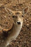 fauna Royalty-vrije Stock Afbeeldingen