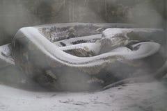 Fauna afectada por la erupción volcánica de la ceniza volcánica fotos de archivo
