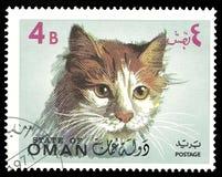 Fauna, Animals, Cats Stock Photos