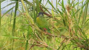 Fauna ave parrot green exotic bird. Video of fauna ave parrot green exotic bird stock footage