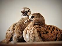 Fauna, Beak, Feather, Bird Stock Photo