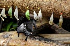 Fauna, Bird, Beak, Organism Royalty Free Stock Image