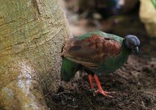 Fauna, Bird, Beak, Organism Stock Photography