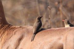 Fauna, Bird, Ecosystem, Beak Royalty Free Stock Photography