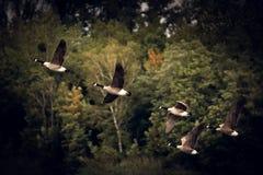 Fauna, Bird, Ecosystem, Sky stock images
