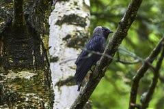 Fauna, Bird, Tree, Beak Stock Photos