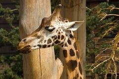 Fauna Stock Images
