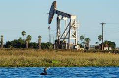 Fauna cerca de la plataforma petrolera Imagen de archivo