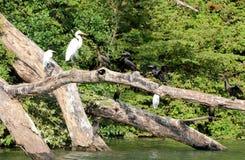 Fauna at Chiapas Mexico Royalty Free Stock Photo