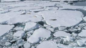 Fauna de la Antártida del iceberg del sello de Crabeater almacen de video