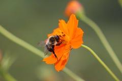 Fauna de la flora Fotografía de archivo