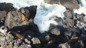 Fauna de la marea de la resaca de la costa de Oregon del Océano Pacífico de la roca del sello almacen de metraje de vídeo