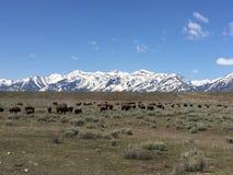 Fauna de la nieve de las montañas de los animales de la naturaleza fotos de archivo