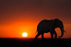 Fauna de la puesta del sol de la salida del sol del elefante de África Foto de archivo libre de regalías