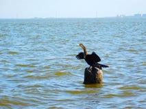 Fauna de Melbourne, la Florida imagen de archivo