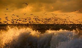 Fauna de pájaros Fotos de archivo