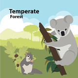 Fauna del bosque templado libre illustration