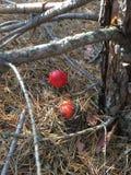 Fauna della foresta Fotografie Stock Libere da Diritti