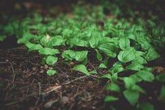 Fauna e flora na floresta foto de stock