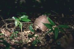 Fauna e flora na floresta fotografia de stock