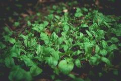 Fauna e flora na floresta imagem de stock royalty free
