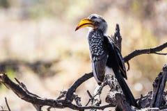 Fauna en Botswana Imagen de archivo
