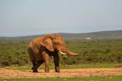 Fauna en Suráfrica Imagen de archivo