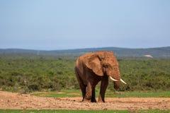 Fauna en Suráfrica Imagenes de archivo