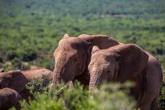 Fauna en Suráfrica Foto de archivo libre de regalías