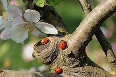Fauna, Flora, Insect, Organism Stock Images