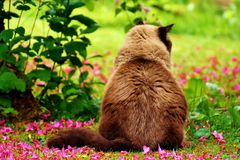 Fauna, Grass, Whiskers, Cat Royalty Free Stock Photo
