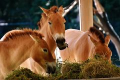 Fauna, Horse, Horse Like Mammal, Mane Royalty Free Stock Photography
