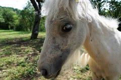 Fauna, Horse, Horse Like Mammal, Mane Stock Photo
