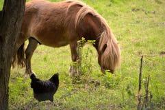 Fauna, Horse, Pasture, Grazing stock photos