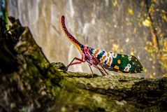 Fauna, Insect, Invertebrate, Organism Royalty Free Stock Image