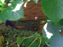 Fauna, Leaf, Bird, Beak stock image