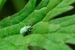 fauna macrocosm Insectos hermosos Insectos, arañas, mariposas y otros insectos hermosos imágenes de archivo libres de regalías
