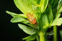fauna macrocosm Insectos hermosos Insectos, arañas, mariposas y otros insectos hermosos foto de archivo