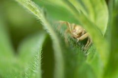 fauna macrocosm Insectos hermosos Insectos, arañas, mariposas y otros insectos hermosos fotos de archivo libres de regalías