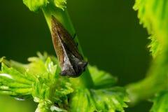 fauna macrocosm Insectos hermosos Insectos, arañas, mariposas y otros insectos hermosos foto de archivo libre de regalías