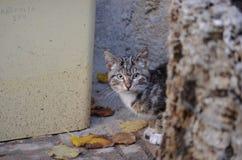 Fauna, Mammal, Small To Medium Sized Cats, Cat Like Mammal Stock Photos