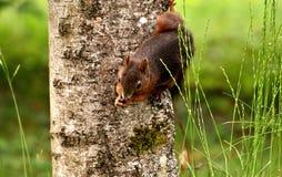 Fauna, Mammal, Wildlife, Grass Royalty Free Stock Image