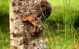 Fauna, Mammal, Wildlife, Grass Stock Photo
