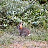 Fauna, Mammal, Wildlife, Rabbit