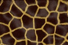 Fauna manchada del fondo Fotografía de archivo libre de regalías