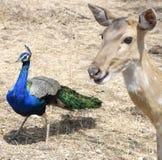 fauna fotografía de archivo libre de regalías