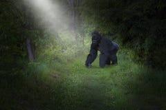 Fauna, naturaleza, gorila, primate, ejemplo fotos de archivo