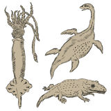 Fauna-palaeontology Stock Image