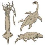 Fauna-paleontologia Imagem de Stock