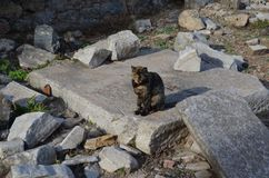 Fauna, Rock, Wildlife, Landscape royalty free stock photography